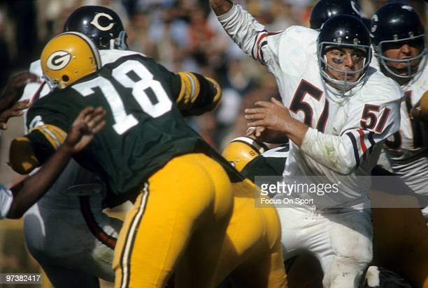 BAY WI CIRCA 1970's Linebacker Dick Butkus of the Chicago Bears in action against the Green Bay Packers circa 1970's during an NFL football game at...