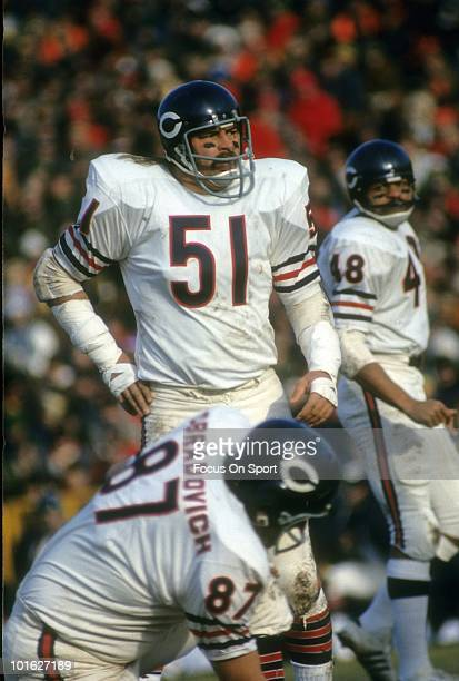 Linebacker Dick Butkus of the Chicago Bears on the field in this portrait circa early 1970's during an NFL football game. Butkus played for the Bears...