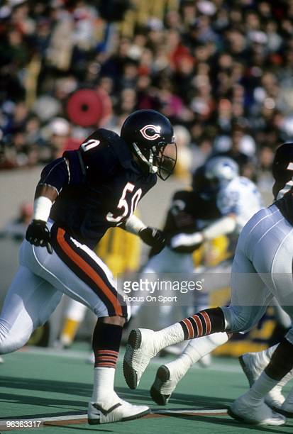 CHICAGO IL CIRCA 1980's Middle Linebacker Mike Singletary of the Chicago Bears in action against the Detroit Lions during a circa mid 1980's NFL...