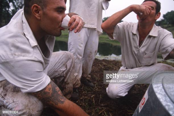 GATESVILLE TX CIRCA 1990's Prisoners labor in the fields at the Hughes Unit a Texas State Prison circa 1990's outside of Gatesville Texas