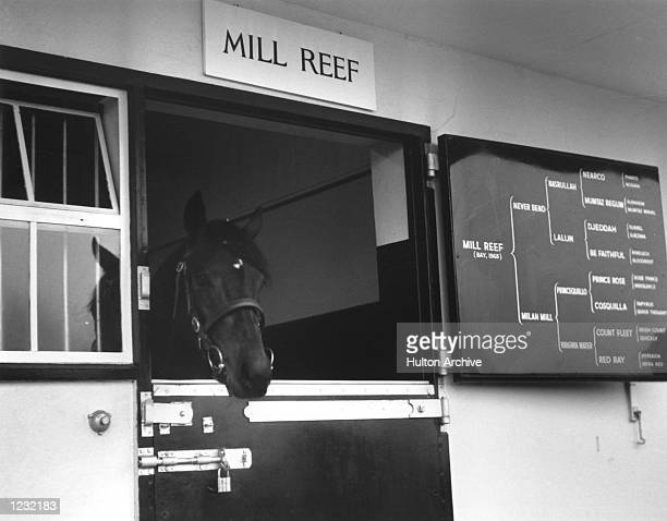 S RACING CAREER CAME TO AN END IN AUGUST 1972 AFTER HE FRACTURED A LEG BUT NOW HIS SERVICES AT THE STUD WILL COMMAND UP TO 10,000 A TIME. Mandatory...
