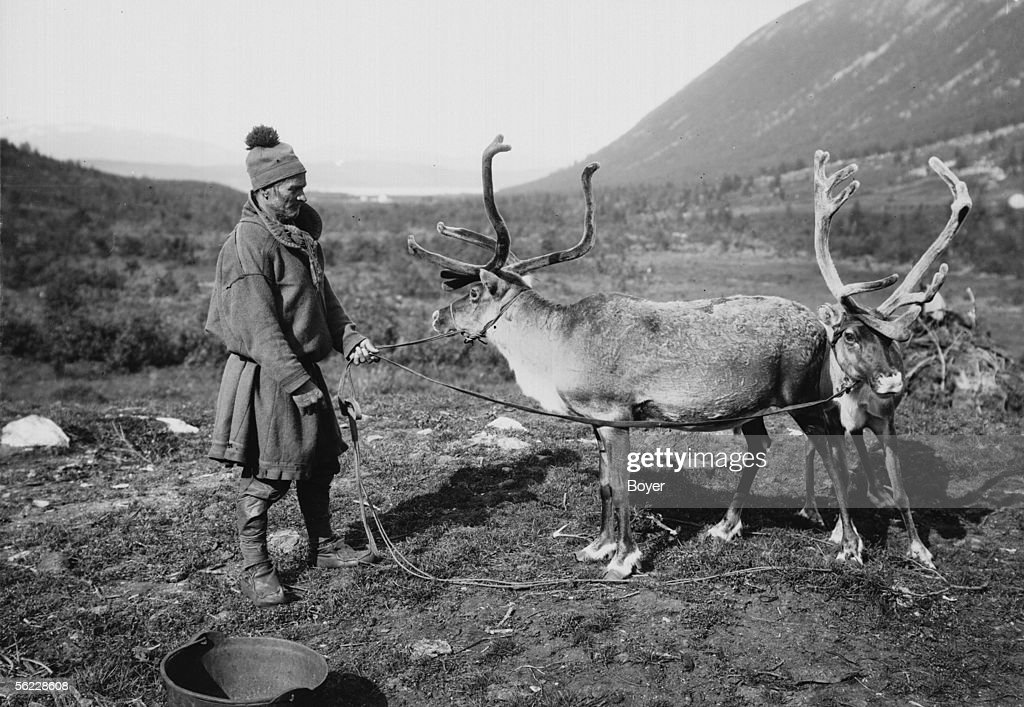 a saami with his reindeer lapland on 1930 news photo getty images
