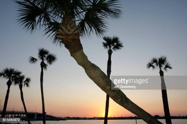 Sabal palms at sunset on the North Beach Causeway