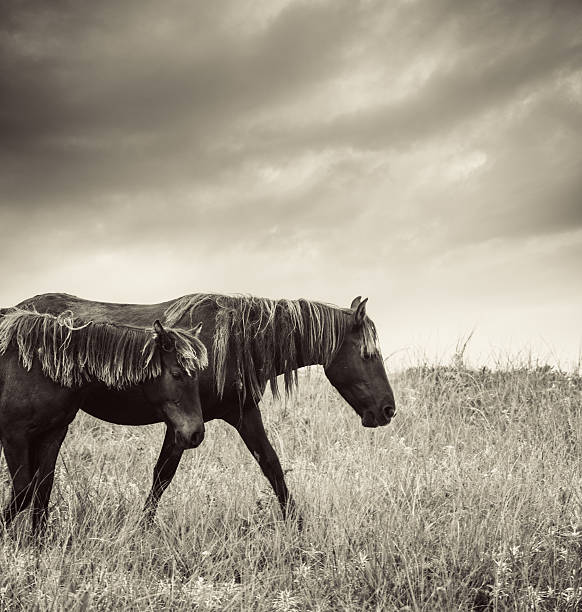Sable Island Horses Wall Art