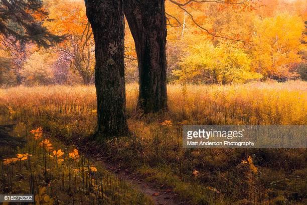 Sable Meadows