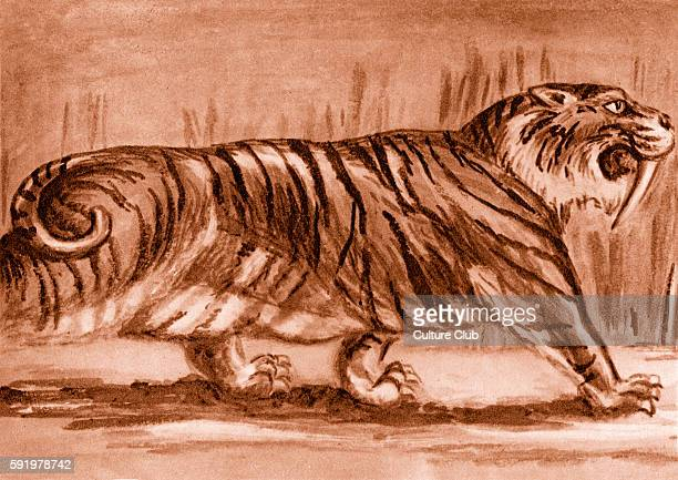 SabreToothed Tiger after artist impression Caption reads 'This animal of the Pleistocene age was larger than the tiger we see in the zoo today'