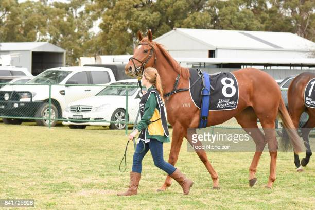Sacambaya parades before the Save the Date BM64 Handicap at Warracknabeal Racecourse on September 02 2017 in Warracknabeal Australia