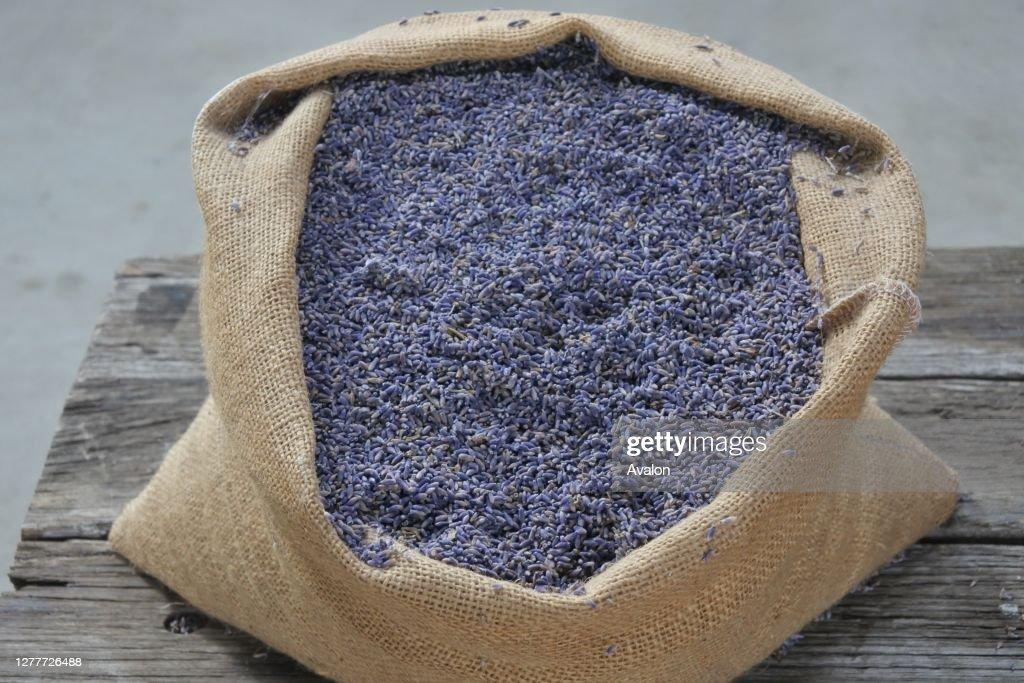 Sack full of Lavender buds. : News Photo