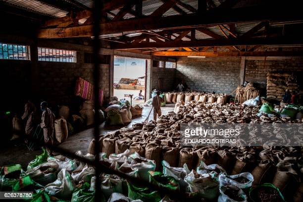 Sacks of cocoa beans are stored at the SCAK cocoa processing plant in Beni on November 14 2016 Cocoa farming in the Beni area started in the late...