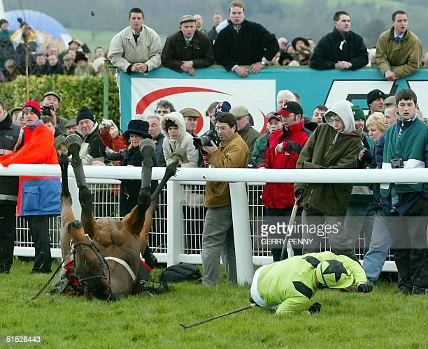 Sackville and jockey Jim Cullen take a fall in the Cheltenham Gold Cup won by Best Mate 14 March 2002 at the Cheltenham Festival The threeday meeting...