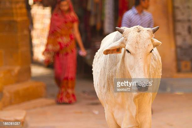 sacred cow - hinduism stock pictures, royalty-free photos & images