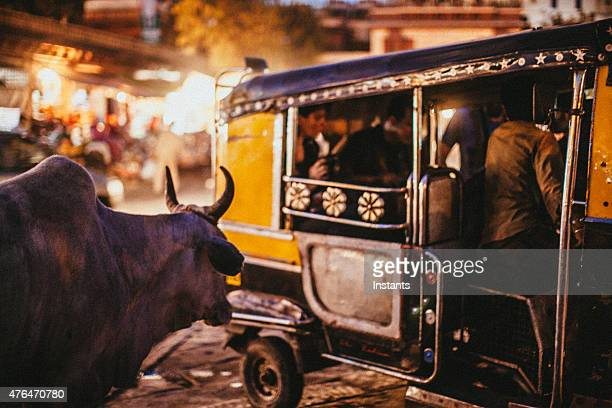 sacred cow - jodhpur stock pictures, royalty-free photos & images