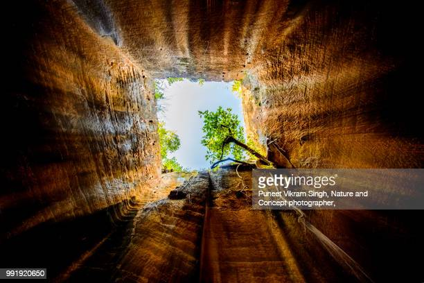 a sacred fig tree growing inside of a cave and inspiring to never give up - hole stock pictures, royalty-free photos & images
