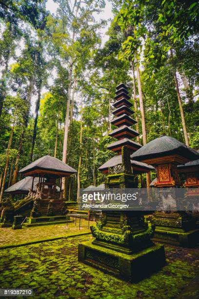 sacred monkey forest sanctuary in ubud, bali, indonesia - balinese culture stock pictures, royalty-free photos & images