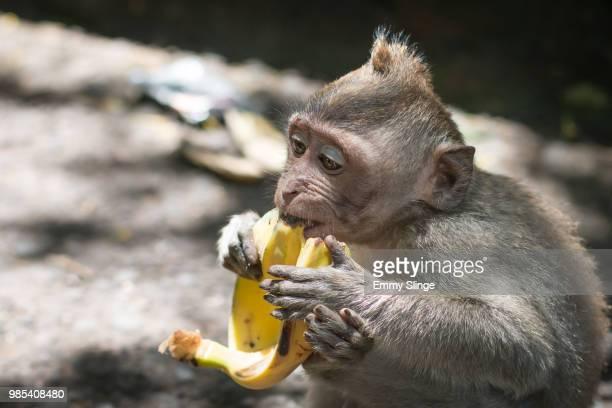 Sacred Monkey III
