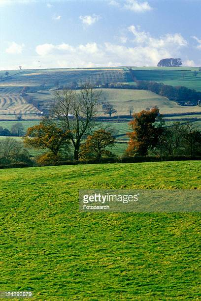 A sacred site along the English countryside in Glastonbury