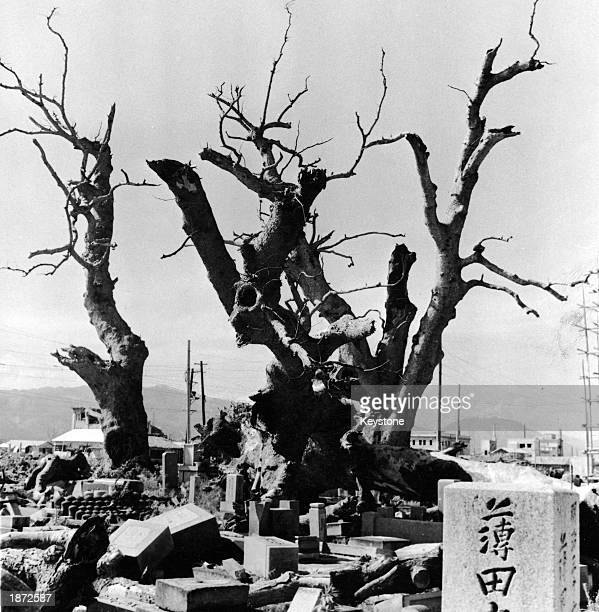 Sacred trees stand bare and broken near fallen tombstones at the temple of Kokutaiji following the US atomic bombing of Hiroshima Japan on August 6...