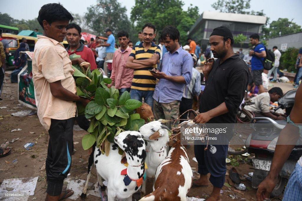 Livestock Market Ahead Of Eid al-Adha