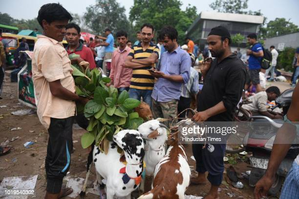 Sacrificial goats at a cattle market near Jama Masjid ahead of Eid alAdha on August 19 2018 in New Delhi India