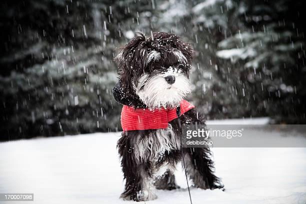 Sad Cold Puppy Snow Winter