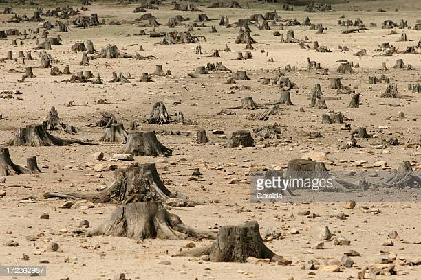 sad image showing the increase in deforestation - deforestation stock pictures, royalty-free photos & images