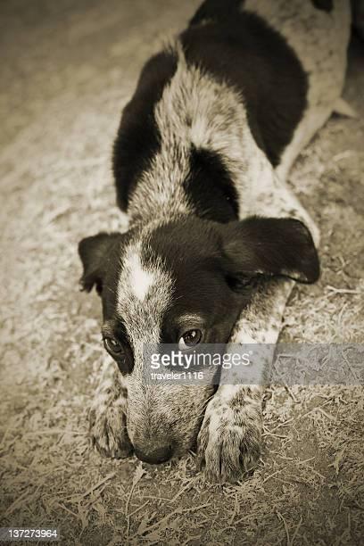 Sad Little Puppy