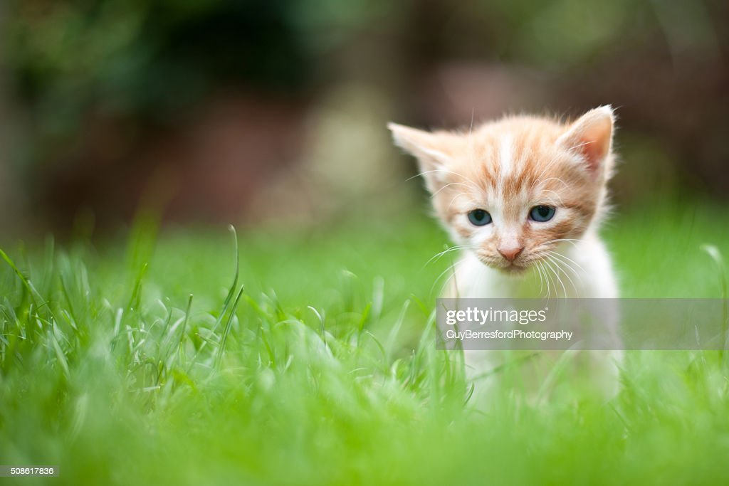 Sad lonely kitten : Stock Photo