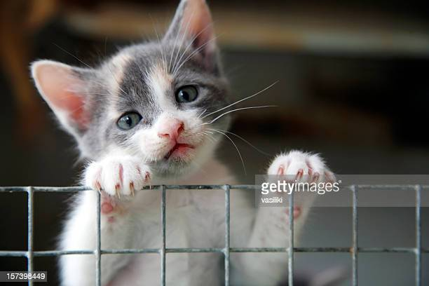 sad looking kitten trying to climb over a wire fence - dierenwelzijn stockfoto's en -beelden