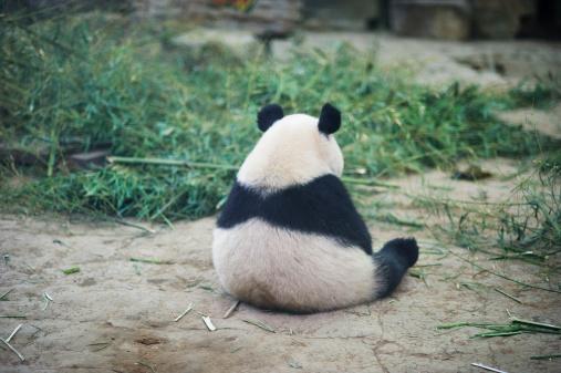 Sad Panda 183296864