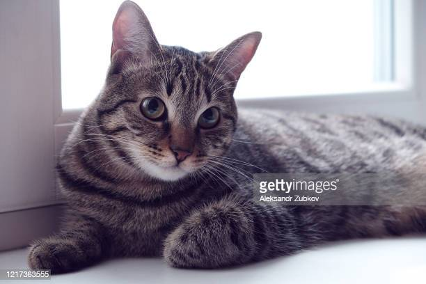 sad pensive cat sitting on the windowsill. - cats stock pictures, royalty-free photos & images