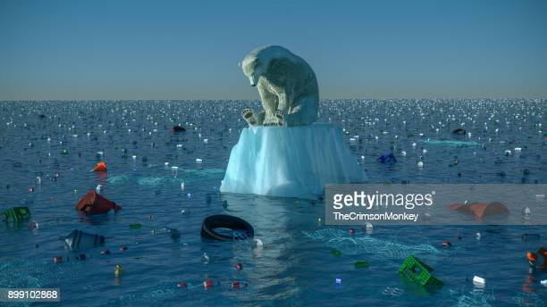 sad polar bear - pollution stock pictures, royalty-free photos & images