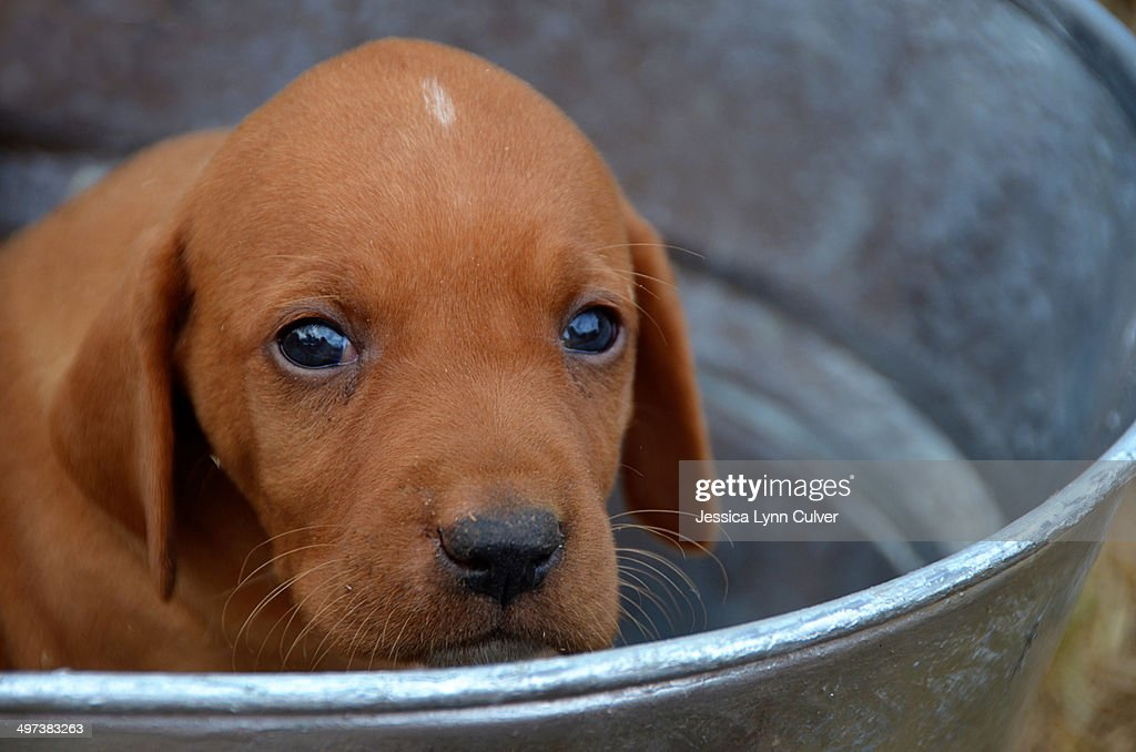 Sad puppy face stock photo getty images sad puppy face stock photo voltagebd Gallery