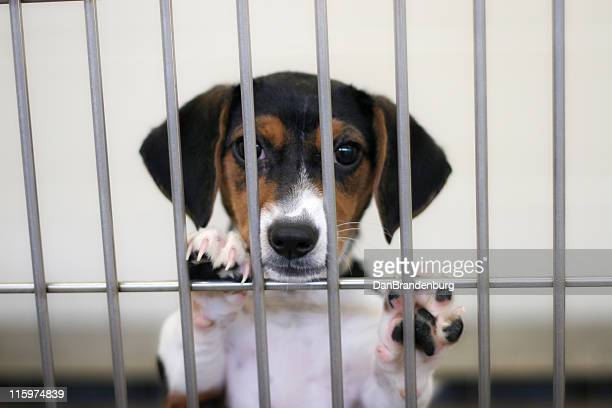 sad puppy - sheltering stock pictures, royalty-free photos & images
