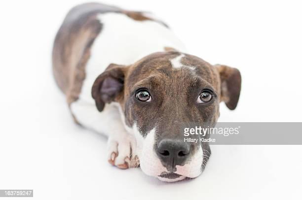 Sad puppy with large eyes