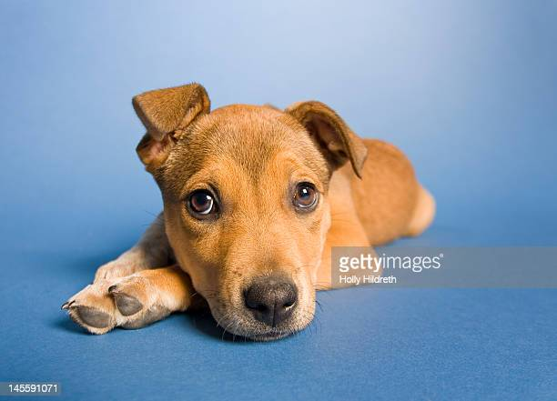saddest puppy in whole world - mixed breed dog stock pictures, royalty-free photos & images