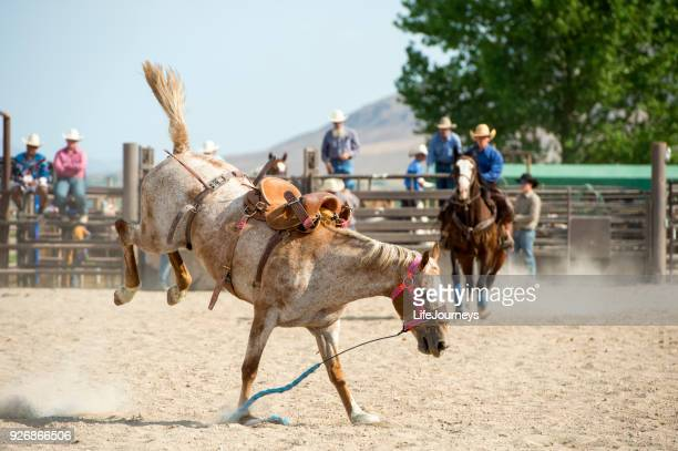 Saddle Bronc At The Rodeo That Has Successfully Gotten Rid Of His Rider.  He is bucking without the rider and running loose in the arena.
