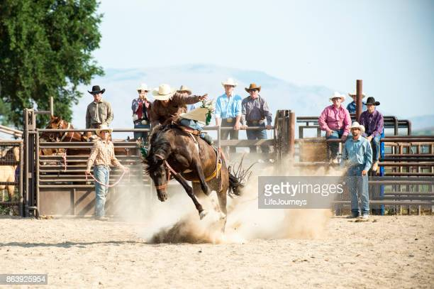 saddle bronc rider at a rodeo - bucking stock photos and pictures