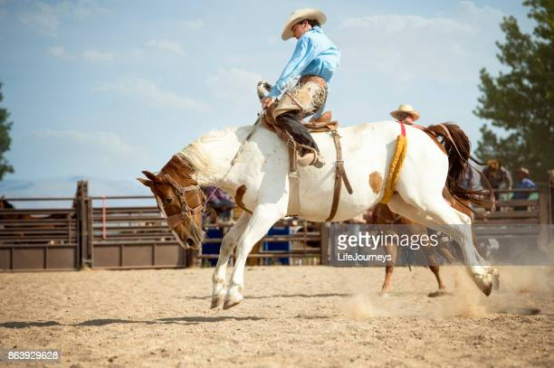saddle bronc rider hoping for a good 8 second ride on his painted horse - bucking stock photos and pictures