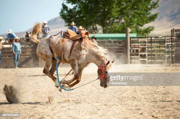 saddle bronc who has successfully thrown his rider bucking in the arena - bucking stock photos and pictures