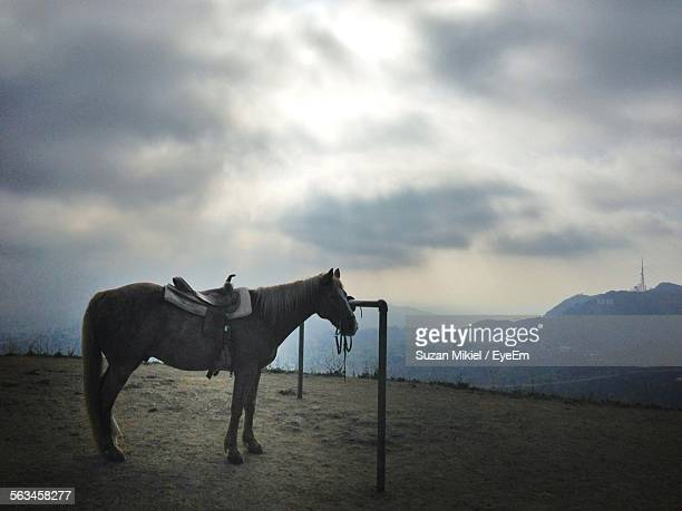 saddled horse on cloudy day - {{relatedsearchurl('london eye')}} stock photos and pictures