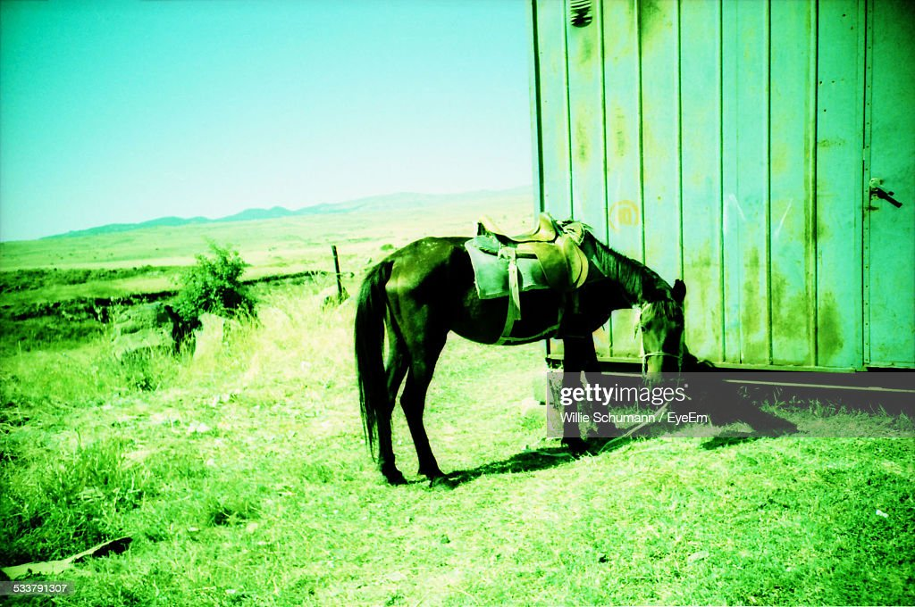 Saddled Horse Tied To Building In Barren Plain : Foto stock