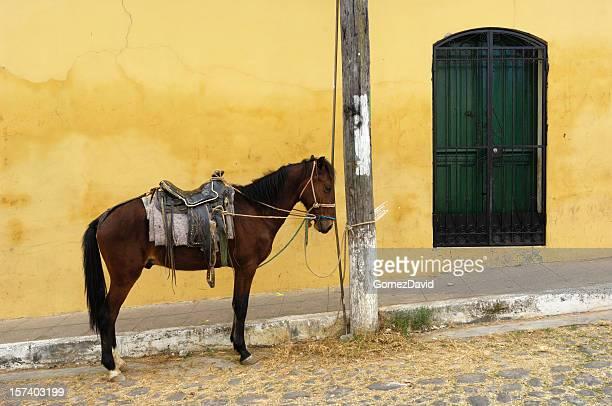 Saddled Horse Tied to Pole