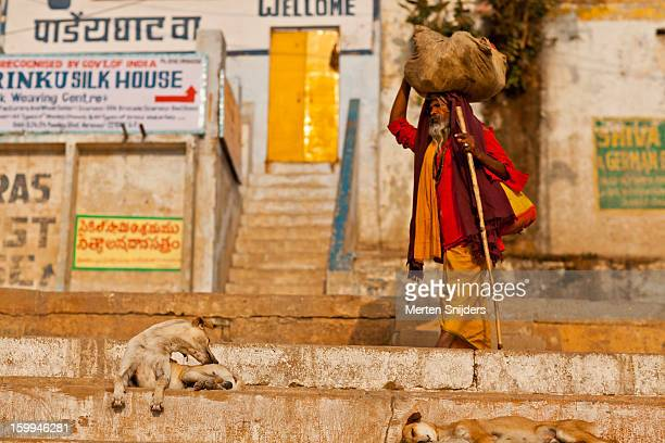 sadhu passes dogs on stairs - merten snijders photos et images de collection