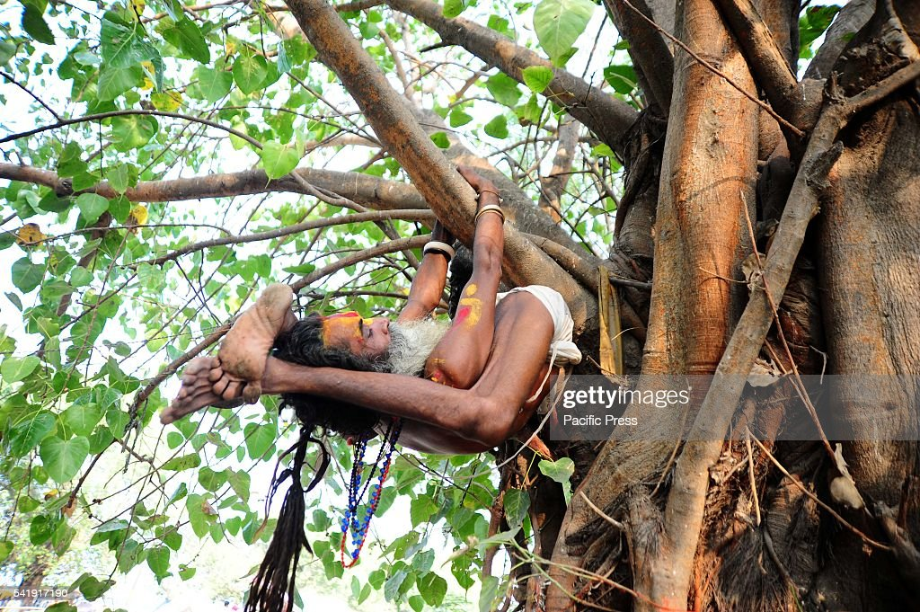 A sadhu performing yoga in a tree on the occasion of International Yoga Day.