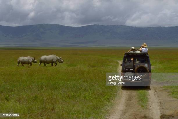 safari car and rhinos - tanzania stock pictures, royalty-free photos & images
