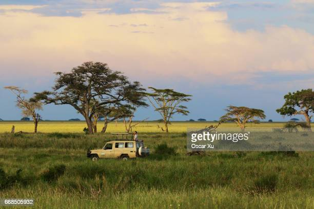 safari in serengeti national park - tanzania stock pictures, royalty-free photos & images