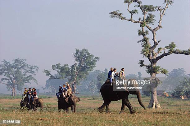 Safari on Elephants Elephas maximus