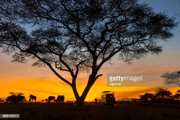safari - kenya stock pictures, royalty-free photos & images