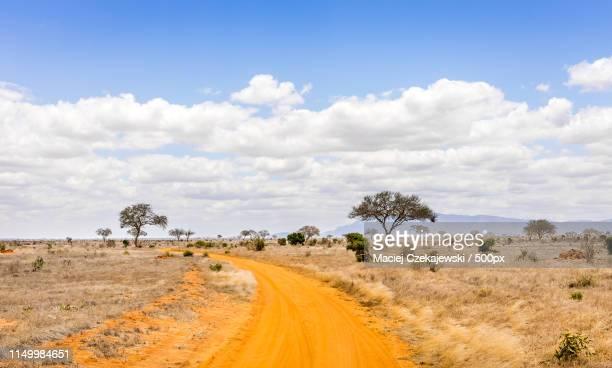 safari road in kenya - east stock photos and pictures