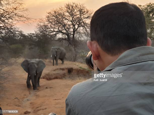 safari tour in looking at african animals - kruger national park stock pictures, royalty-free photos & images